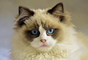 kot ciekawostki o kotach koty